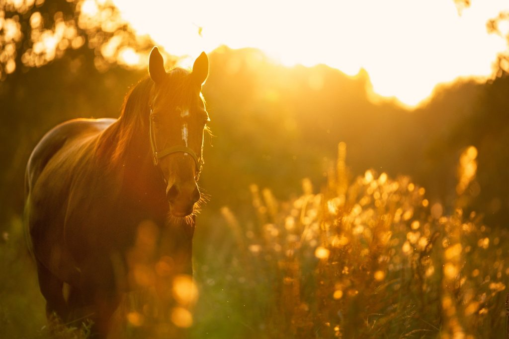Horse in spring meadow at dusk