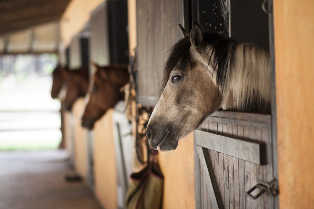Horses stabled for winter